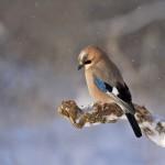 Vogel in Winterlandschaft auf Ast
